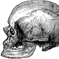 Cro-Magnon-male-Skulll